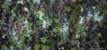 John Alexander-Wild Grapes