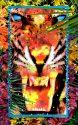 Peekaboo - Tiger