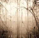 Abstract Nature, Louisiana