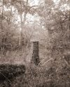 David Halliday - Stump