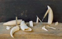 Whale Teeth and Bone Shards