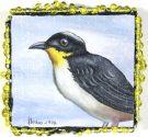 Terra #150: Yellow Throated Brush Finch