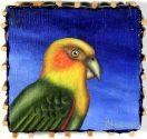 Terra #177: Saffron Headed Parrot