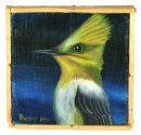 Terra #269:Long Tailed Silky Flycatcher
