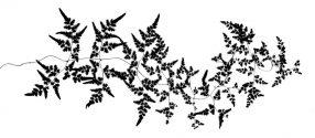 Feather Vine