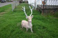 Deer (Fix-A-Thing Series)