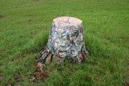 Tree Stump (Fix-A-Thing Series)