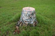 Fix-A-Thing (Tree Stump)