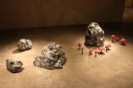 Rocks with Mushrooms