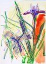 Untitled 13728 (Iris), n/d