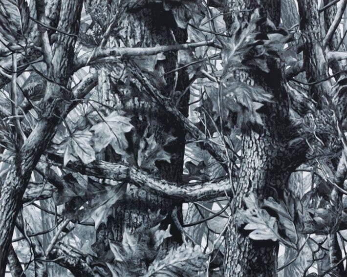 Wayne-Gonzales-Forest